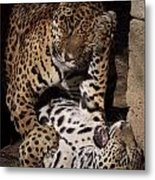 Play Time Metal Print