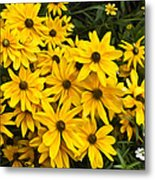 Please Don't Eat The Daisies Metal Print