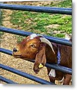 Please Exonerate Me - Billy Goat Metal Print