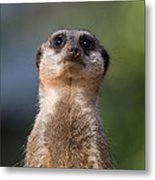 Please Sir Can I Have Some More Metal Print by Julie L Hoddinott