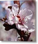 Plum Blossoms 10 Metal Print