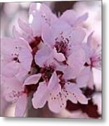 Plum Blossoms 4 Metal Print