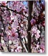Plum Blossoms 6 Metal Print