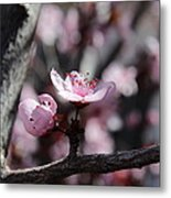 Plum Blossoms 9 Metal Print