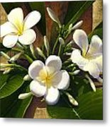 Plumeria Metal Print by Anne Wertheim