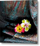 Plumeria Flowers Metal Print