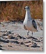 Poised Seagull Metal Print