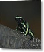 Poisonous Green Frog 03 Metal Print