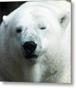 Polar Bear - 0001 Metal Print
