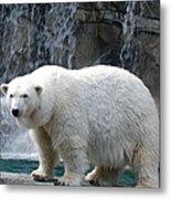 Polar Bear 2 Metal Print