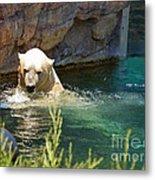 Polar Bear Swim Metal Print