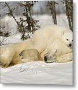 Polar Bear With Cub In Snow Metal Print