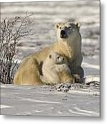 Polar Bear With Cub, Watchee Metal Print