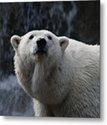 Polar Bear With Waterfall Metal Print