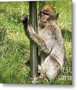 Pole Dancing Macaque Style Metal Print