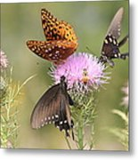 Pollen Party Metal Print by Christopher Ewing