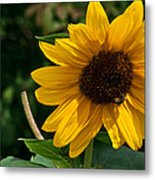 Pollinating In Camouflage Metal Print