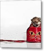 Pomeranian 2 Metal Print by Everet Regal