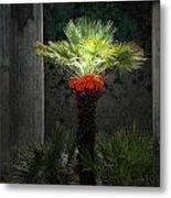 Pompeii Palm Tree Italy Metal Print