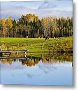 Pond And Cattle Near Mansonville Metal Print
