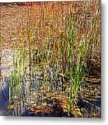 Pond And Rushes Metal Print