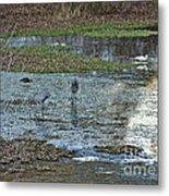 Pond Birds At Sunset Metal Print