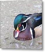 Pond Duck Metal Print