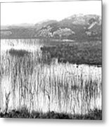 Pond In Tha North Of Ireland Metal Print