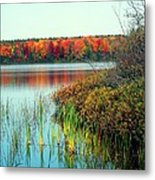 Pond In The Woods In Autumn Metal Print