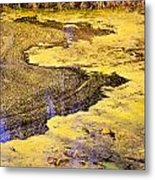 Pond Scum One Metal Print