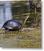 Pond Turtle Basking In The Sun Metal Print