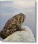 Pondering Toad Metal Print
