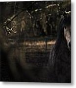 Pony In The Brambles Metal Print by Justin Albrecht