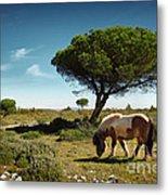 Pony Pasturing Metal Print