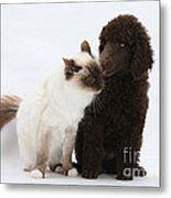 Poodle Pup And Cat Metal Print