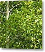 Poplar Tree And Leaves No.368 Metal Print