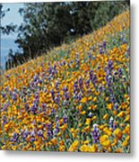 Poppies And Lupine Flowers Blanket Metal Print