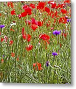 Poppies And Purple Flowers Metal Print