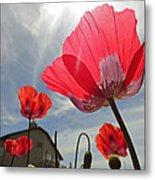 Poppies And Sky Metal Print