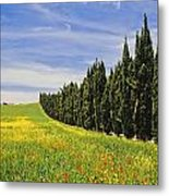 Poppies And Wild Flowers In Wheat Field Metal Print