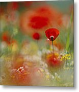 Poppies And Wildflowers In The Desert Metal Print by Annie Griffiths