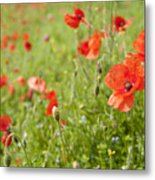 Poppies In A Field Metal Print