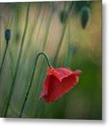 Poppies Mood Metal Print