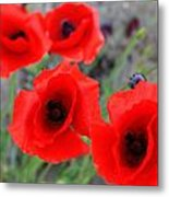 Poppies Of Stone Metal Print