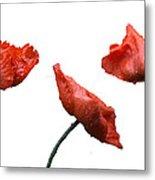 Poppies On White Metal Print