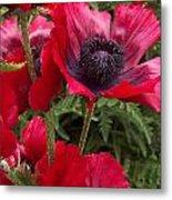 Poppies Rouge Metal Print