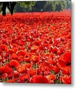 Poppies  Metal Print by Tammy Cantrell