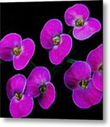 Poppin Pink Petals Metal Print