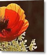 Poppy And Lace Metal Print