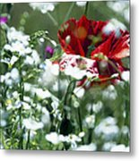 Poppy And White Flowers Metal Print